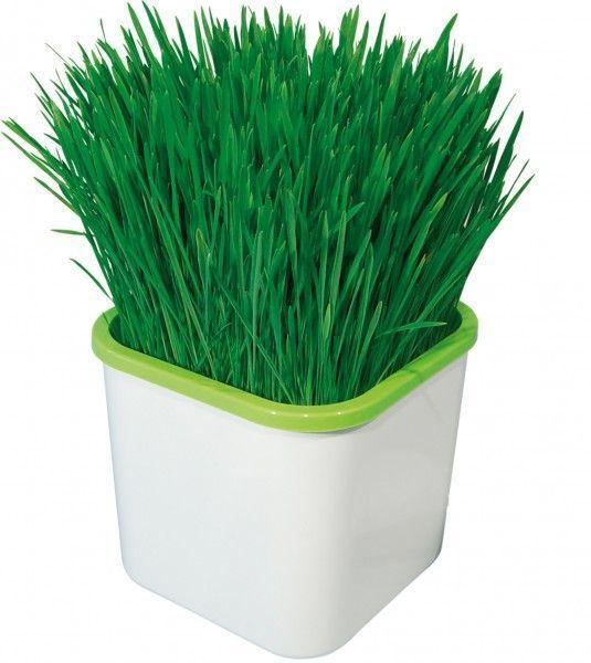 Проращиватель Здоровья КЛАД (для выращивания зеленой травки), в домашних условияхПроращиватели семян<br>Проращиватель Здоровья КЛАД (для зеленой травки)<br> <br>  Смотрите также - Другие разновидности проращивателей Здоровья КЛАД<br> <br>Устройство модели Здоровья КЛАД для зеленой травки станет отличным решением для поддержания здорового образа жизни любимых питомцев. Это нехитрое устройство поможет вырастить зелень в домашних условиях в считанные часы. Эффект работы прибора заключается в насыщении влаги, которая поступает в землю, где выращивается растение, воздухом. За счет обогащения домашнего грунта кислородом, растения всходят и набирают жизненные силы в разы быстрее, нежели чем при обычных условиях взращивания. Таким образом можно легко и быстро вырастить травку кошек, кроликов и прочих питомцев, которым необходимы витамины такого спектра, при этом исключается необходимость в добавлении удобрений и минеральных веществ для эффективного роста растений.<br> <br>Проращиватель Здоровья Клад для зеленой травки, это полезное устройство, с помощью которого можно выращивать зелень для вашего домашнего животного. Используя проращиватель, можно самостоятельно вырастить натуральную зелень в домашних условиях, не используя пр  этом какие-либо добавки и вещества для ускорения процессов.<br> <br>Как работает проращиватель Здоровья КЛАД<br> <br>Проращиватель, довольно прост в использовании и не требует специальных навыков. Быстрому выращиванию зелени, способствует то, что влага, поступающая в земплю, насыщается кислородом, растение получает гораздо больше питательных веществ, чем при обычном выращивании. Таким способом, можно в кратчайшие сроки вырастить траву для попугаев, кошек, хомячков и других питомцев, которым необходимо получать витамины в виде зеленой травы.<br> <br>Комплектация:<br> <br> <br>  Емкость<br> <br>  Корзинка<br> <br>  Крышка<br> <br>  Подложка<br> <br> <br>Данная модель не снабжена компрессором.<br> <br>Купить Здоровья КЛАД<br> <br>Купить Здоровья КЛАД, м